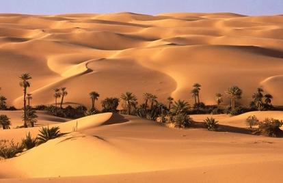 Désert du Sahara, oasis et palmiers: ont peut les reverdir!